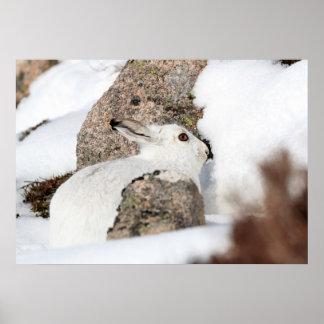 白い山のノウサギ ポスター