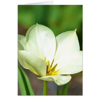 白い春のチューリップ カード