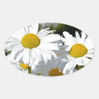 白い春のデイジー 楕円形シール
