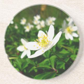 白い春の花 コースター