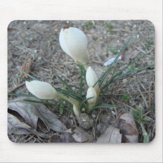 白い最初芽 マウスパッド