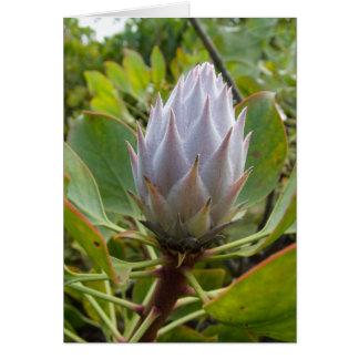 白い熱帯花 カード