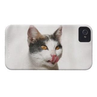 白い猫の舐めることのポートレート Case-Mate iPhone 4 ケース