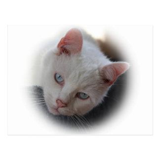 白い猫 ポストカード