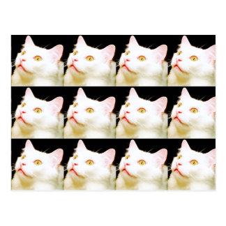白い猫、猫、Postcrossingの郵便はがき ポストカード