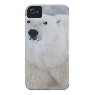 白い白くま Case-Mate iPhone 4 ケース