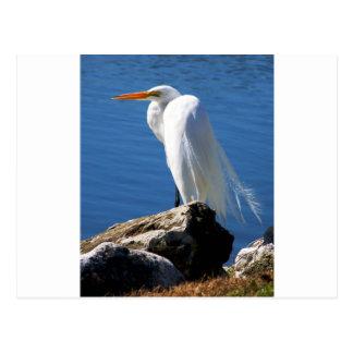 白い白鷺 ポストカード