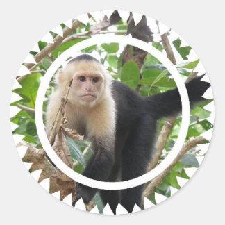 白い直面されたCapuccin猿のステッカー ラウンドシール