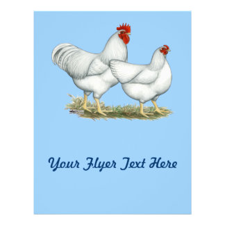 白い石の鶏 チラシ