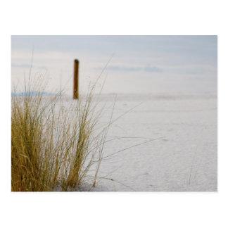 白い砂の草-郵便はがき ポストカード