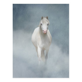 白い美しい ポストカード