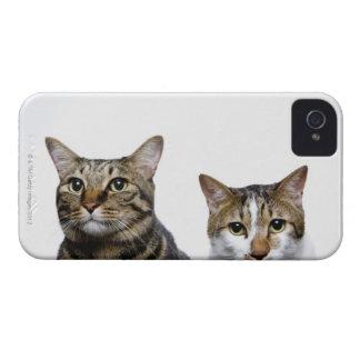 白い背景の日本のな猫そしてManx猫 Case-Mate iPhone 4 ケース