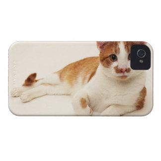 白い背景の猫 Case-Mate iPhone 4 ケース