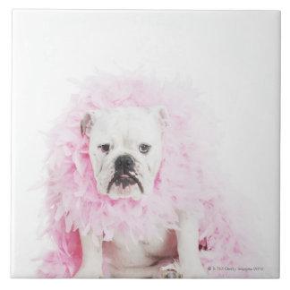 白い背景、白いブルドッグ、ピンクの羽 タイル