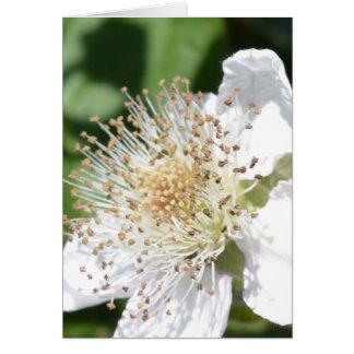 白い花のマクロ カード