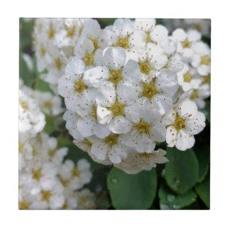 白い花の白熱 タイル