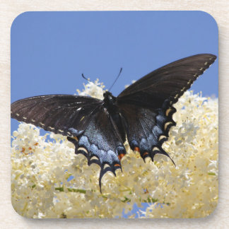 白い花の蝶 ビバレッジコースター