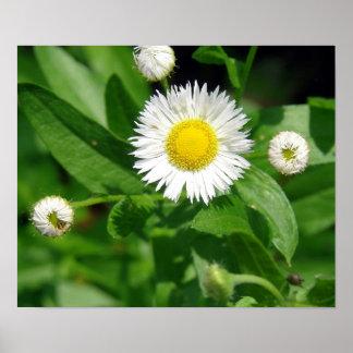 白い花の雑草 ポスター