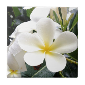 白い花柄 タイル
