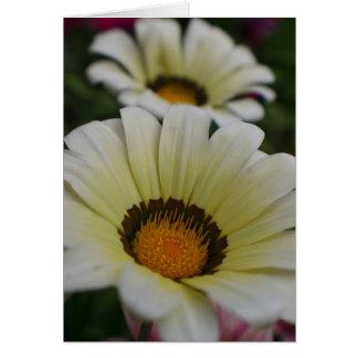 白い花 カード