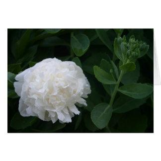 白い花 グリーティングカード