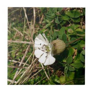 白い花 タイル