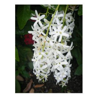 白い花 ポストカード