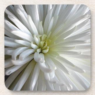 白い菊 ドリンクコースター