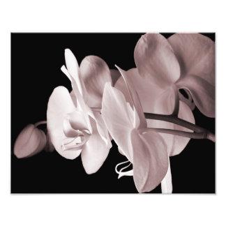 白い蘭の花の黒の背景の抽象芸術 フォトプリント