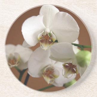 白い蘭 コースター