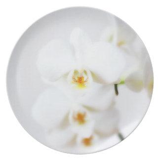 白い蘭 プレート