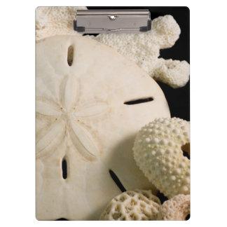 白い貝殻および砂ドル クリップボード