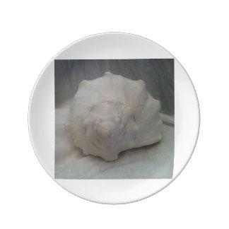 白い貝殻 磁器プレート