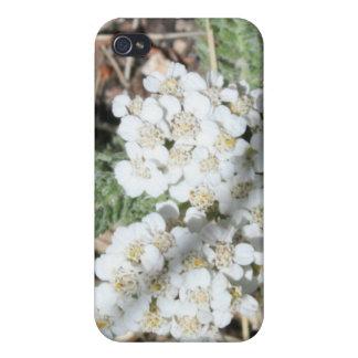 白い野生の花4/4s iPhone 4/4Sケース
