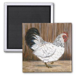 白い鶏の磁石 マグネット
