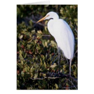 白い鷲 カード