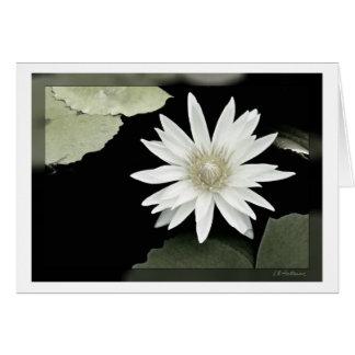 白い《植物》スイレン カード