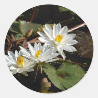 白い《植物》スイレン ラウンドシール