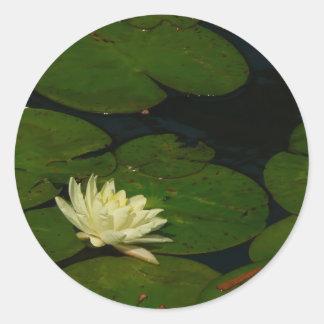 白い《植物》スイレンIの平和な花の写真 ラウンドシール