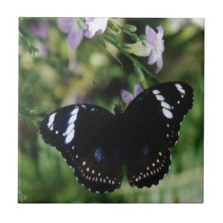 白いAdmira Butterflyl .jpg タイル