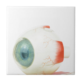 白いbackground.jpgで隔離されるモデル人間の目 タイル