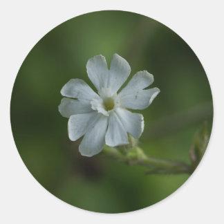 白いCampionの野生の花の花の円形のステッカー ラウンドシール