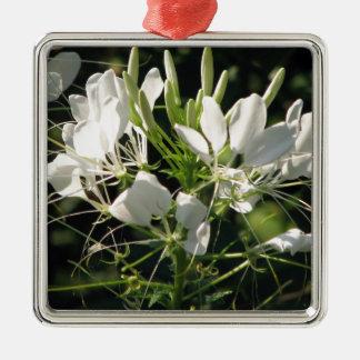 白いCleomeのくも花 メタルオーナメント