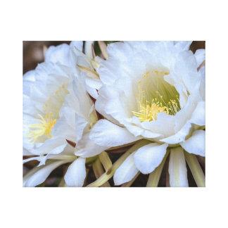 白いEchinopsisのサボテンの開花 キャンバスプリント
