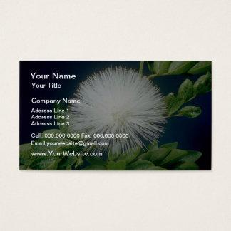 白いHaeleのlehua (Calliandraのinaequilatera)のflowe 名刺