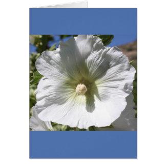 白いHollyhockの花 カード