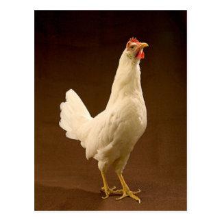 白いLeghornの鶏 ポストカード