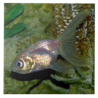 白いranchooのveiltaleの金魚のタイル タイル