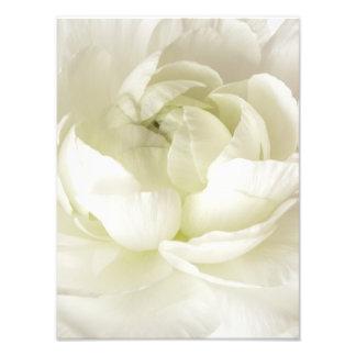 白いRanunculusの最高鍵の花のテンプレートのカスタム フォトプリント