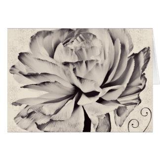 白いRanunculusの花の黒の背景 カード